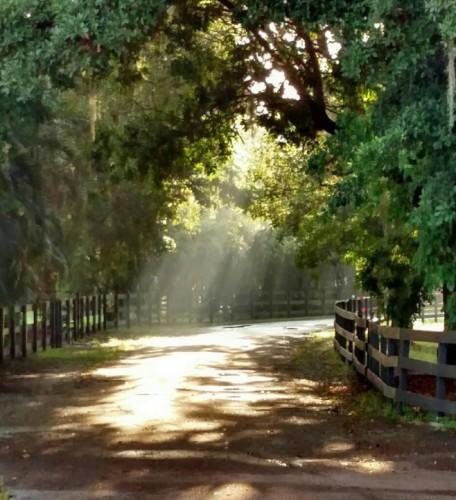 path-sunlight